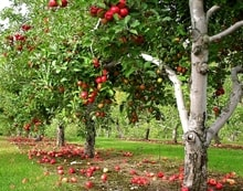 orchard chinese farm